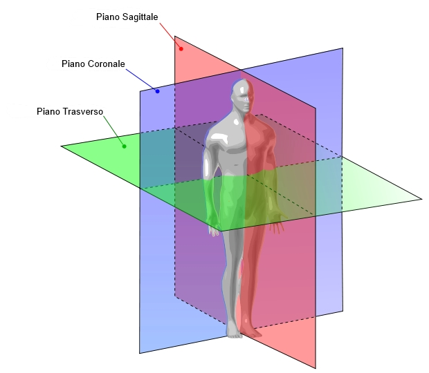 Human_anatomy_planes.jpg